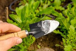 6 действенных способов применения соды в огороде
