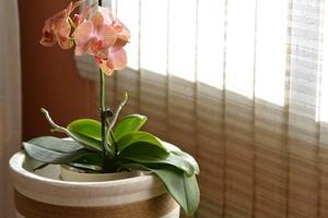 Улучшаем воздух дома: 5 растений, которые выделяют больше всего кислорода