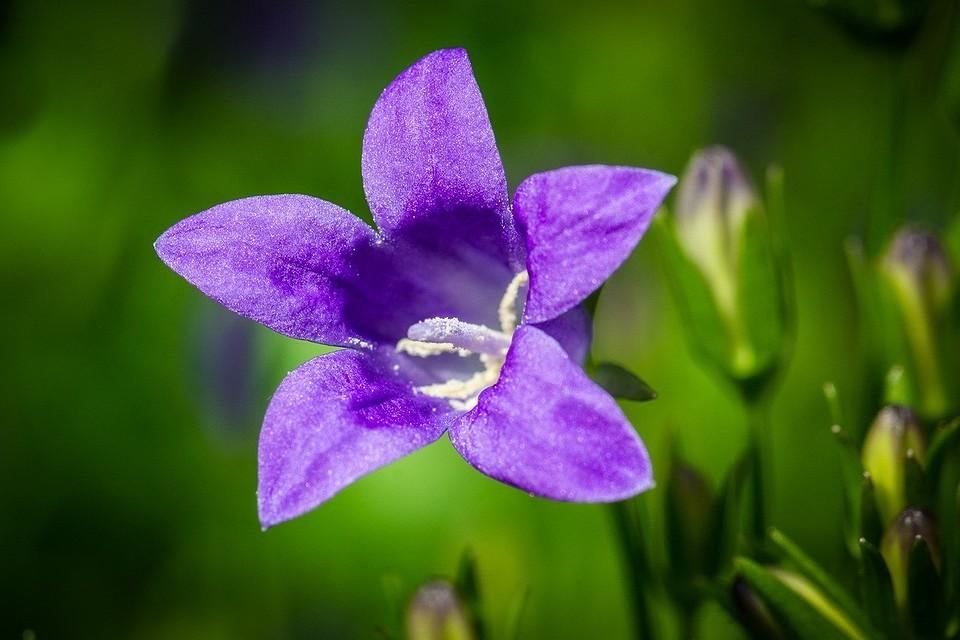 7 красивых полевых цветов для вашего сада, которым не нужен особый уход