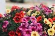 Как вырастить петунию: подробный гид для садоводов