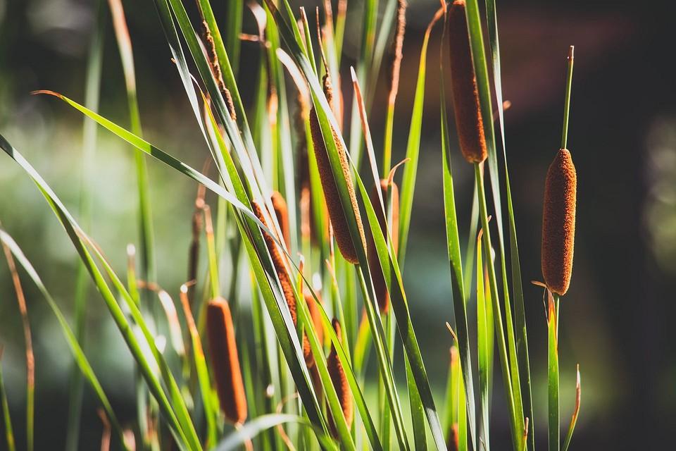 Не только кувшинки: 5 красивых растений для дачного прудика