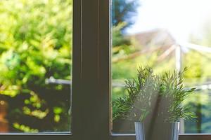 Что посадить на южном окне: 7 растений, которые не боятся яркого света