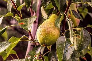 7 советов по уходу за садом во время затянувшихся дождей (будьте готовы заранее)