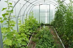 5 лучших растений для теплицы на даче