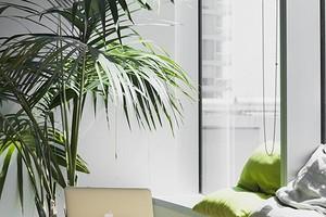 5 комнатных пальм, которые сможет вырастить каждый
