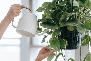 5 советов для тех, кому достались «убитые» комнатные растения (освежаем их!)