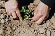 5 «бабушкиных» советов по садоводству, которым не нужно следовать