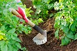 Как правильно окучивать картошку вручную и механизированным способом