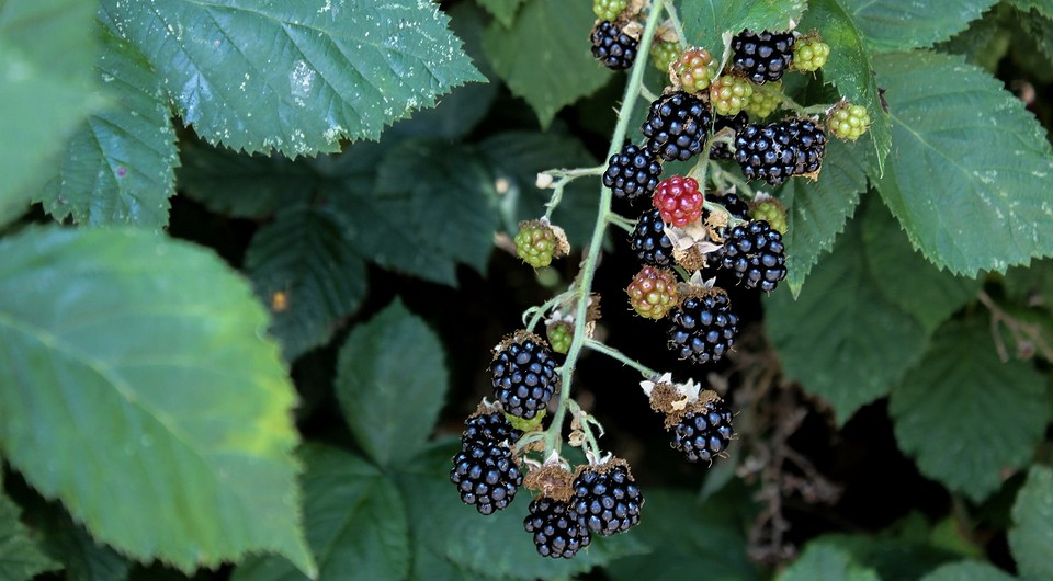 7 неприхотливых растений, которые дадут вкусный урожай