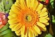 5 садовых растений, которые вы сможете забрать с собой в город (полезно знать!)