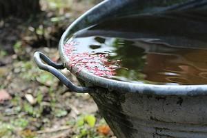 Экономим ресурсы: 4 способа использовать дождевую воду на даче