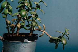 Оставьте в магазине: 6 комнатных растений, которые вряд ли украсят интерьер