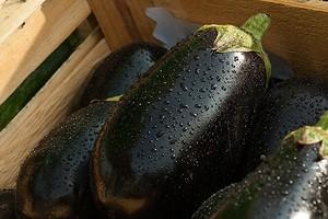 Как правильно выращивать баклажаны в теплице: инструкция дачнику