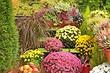 9 растений, которые будут цвести и украшать ваш сад осенью (вы еще успеете полюбоваться клумбой)