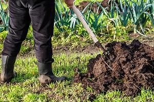 7 лучших органических удобрений для огорода
