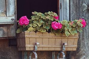 И дома, и в саду: 6 растений-универсалов, которые приживутся везде