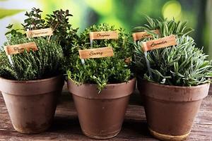 6 лечебных трав, которые можно вырастить на подоконнике