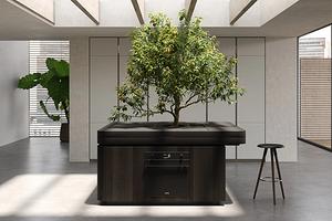 Дерево посреди кухни: дизайнер из Милана представил необычный проект