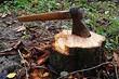 Как избавиться от пня и корней на участке: 4 способа, которые помогут