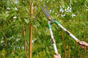 Обрезка плодовых деревьев летом: 6 простых приемов