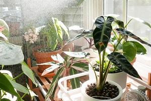5 популярных мифов об уходе за комнатными растениями, в которые не нужно верить