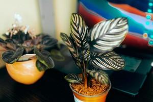 Уход за комнатными растениями осенью: 8 задач, которые нужно выполнить каждому