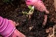 До следующего сезона: 8 правил хранения цветов, которые вы выкопали с огорода