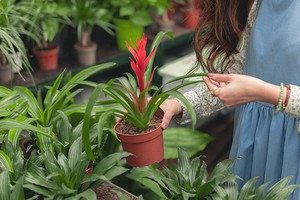 4 причины пересадить комнатное растение осенью (и побыстрее)