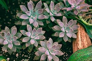 6 комнатных растений, которым нужно ограничить полив уже сейчас (чтобы они не погибли)