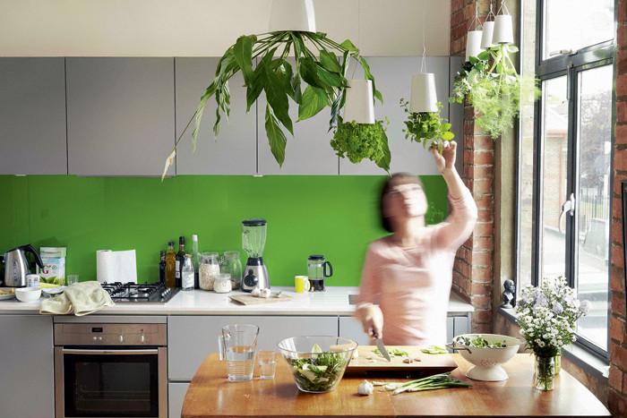 Домашнее озеленение