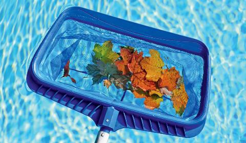 Уход за бассейном: как бороться с бактериями и водорослями