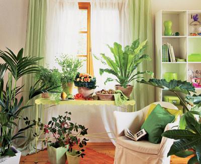 Вечнозеленый оазис