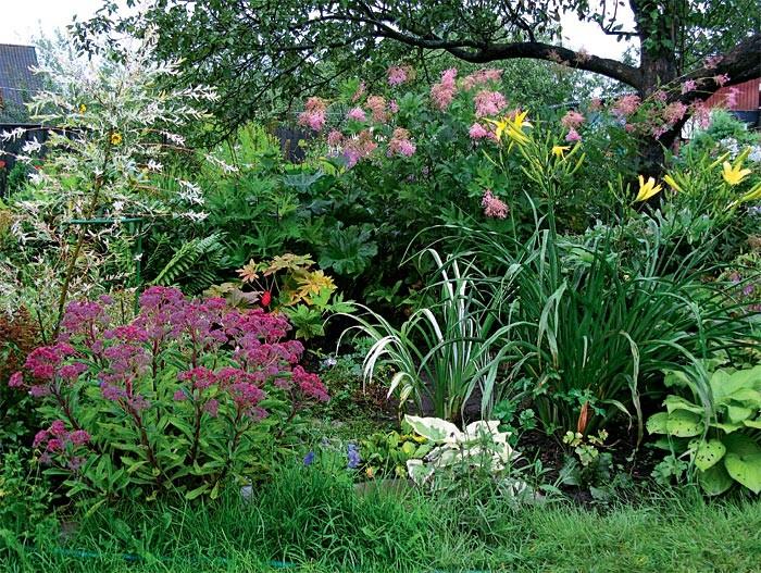 Ботанический сад на любимой даче
