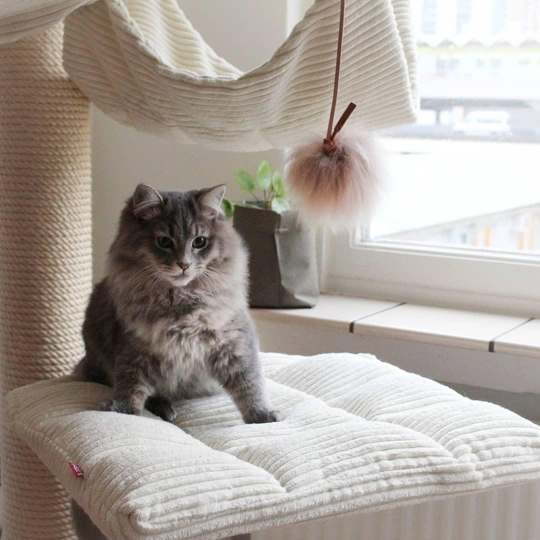7 самодельных игрушек для кошки, которые подойдут современному интерьеру