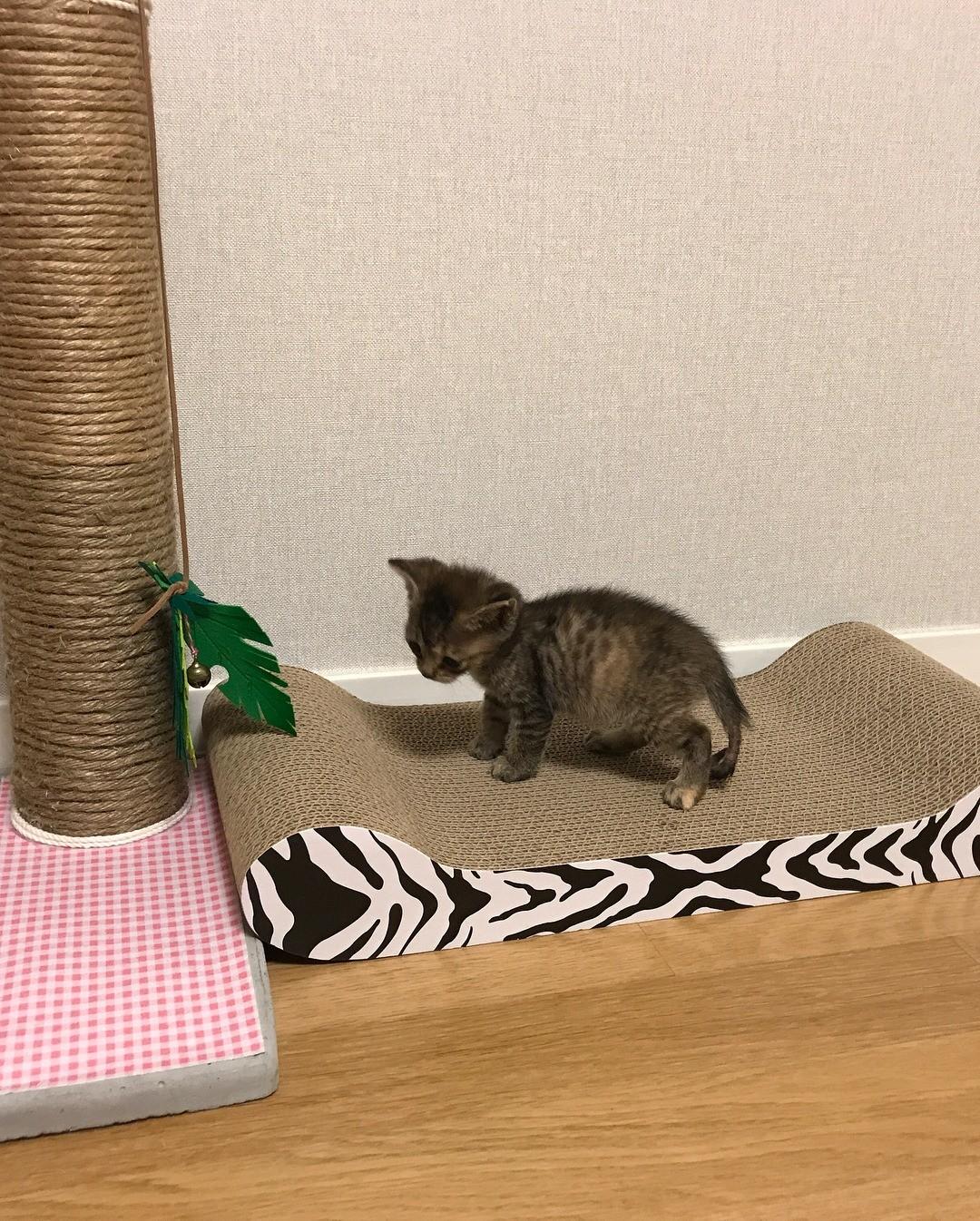 Instagram kittensaysmilk