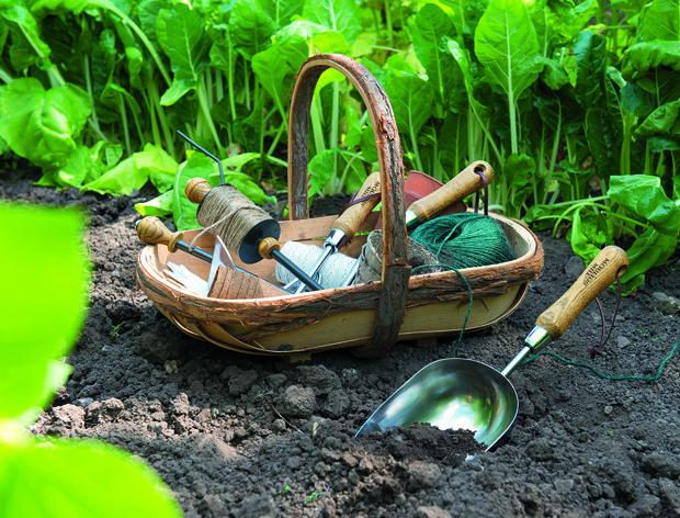 Готовимся к весне: советы по выбору инструментов и растений