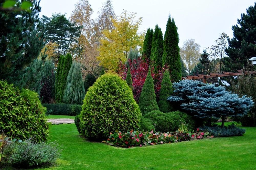Теневыносливые хвойные для сада