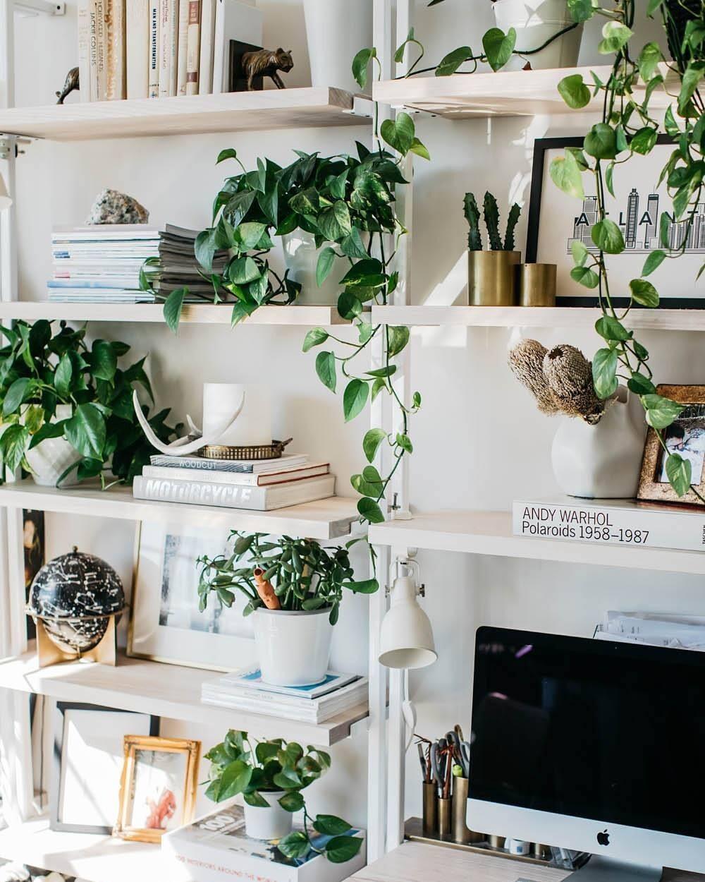 13 способов озеленить квартиру и освободить подоконники
