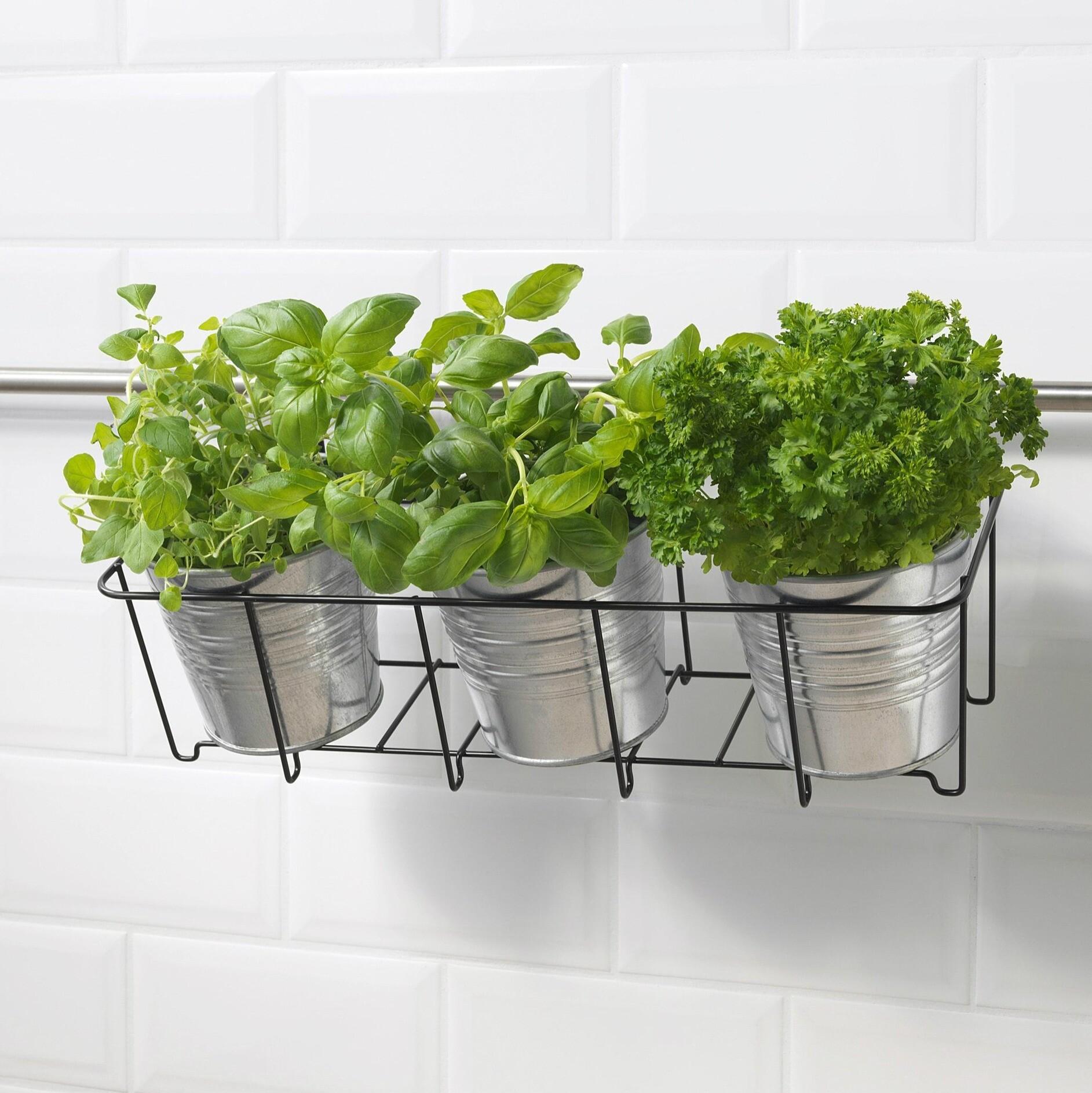 Как добавить комнатные растения в интерьер, если совершенно нет места