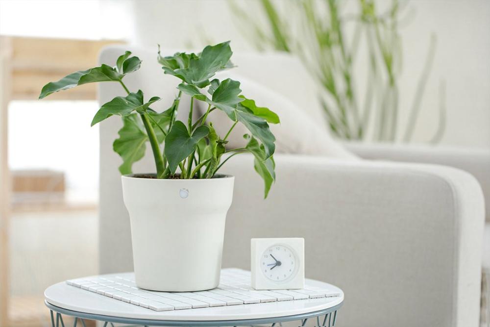 5 умных гаджетов, которые позаботятся о цветах вместо вас