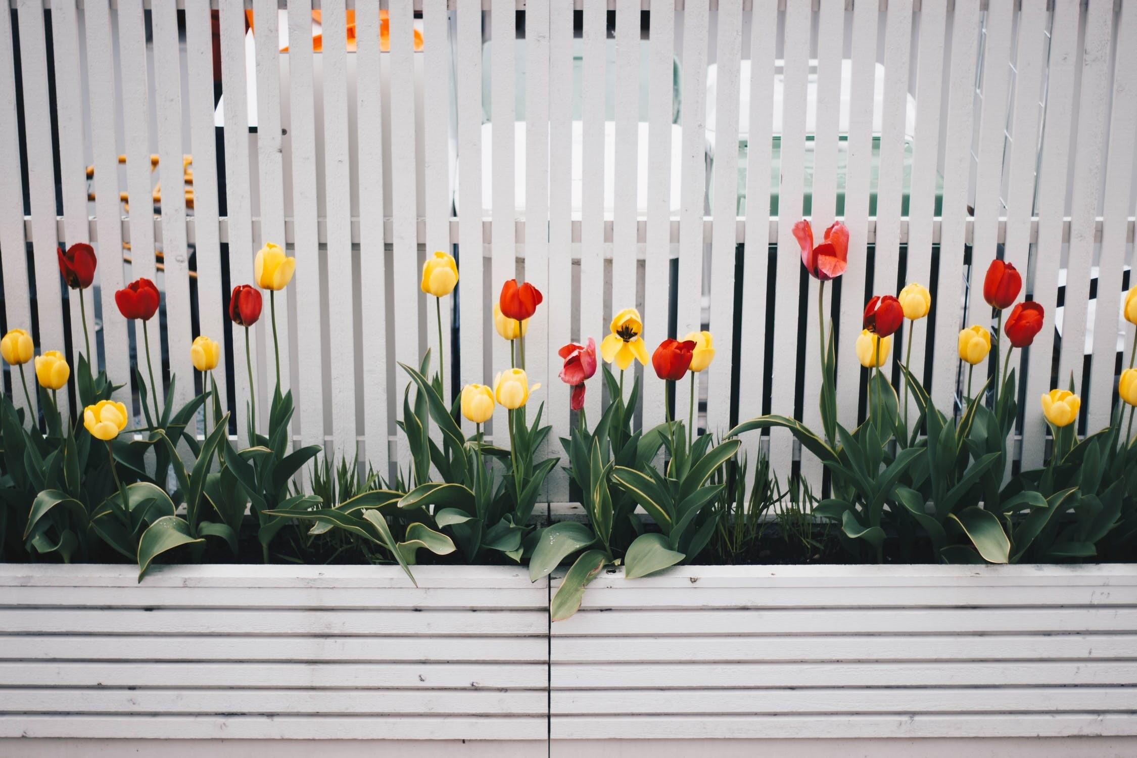 8 проверенных способов спрятать некрасивый забор