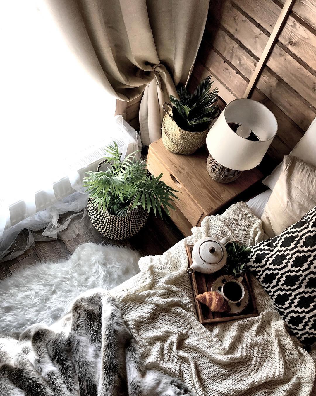 домашние цветы комнатные растения в оформлении дачного домика фото