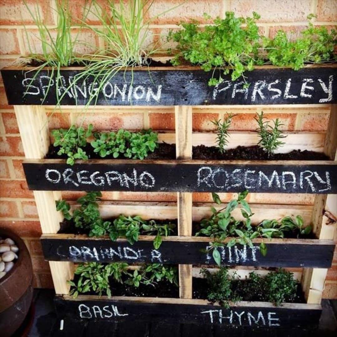 Сад для выращивания полезных растений фото