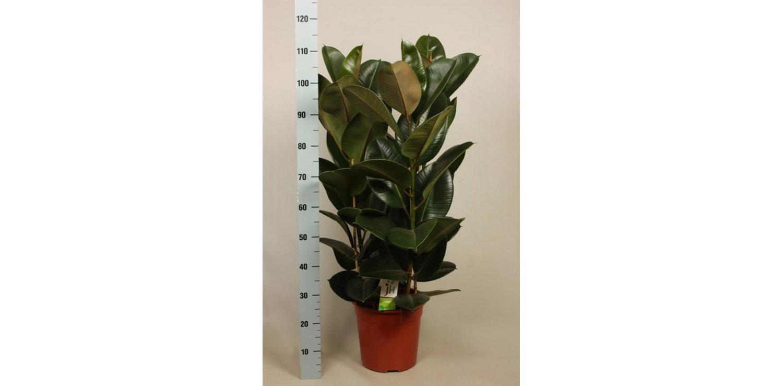9 тенелюбивых растений, которые можно купить в ближайшем гипермаркете