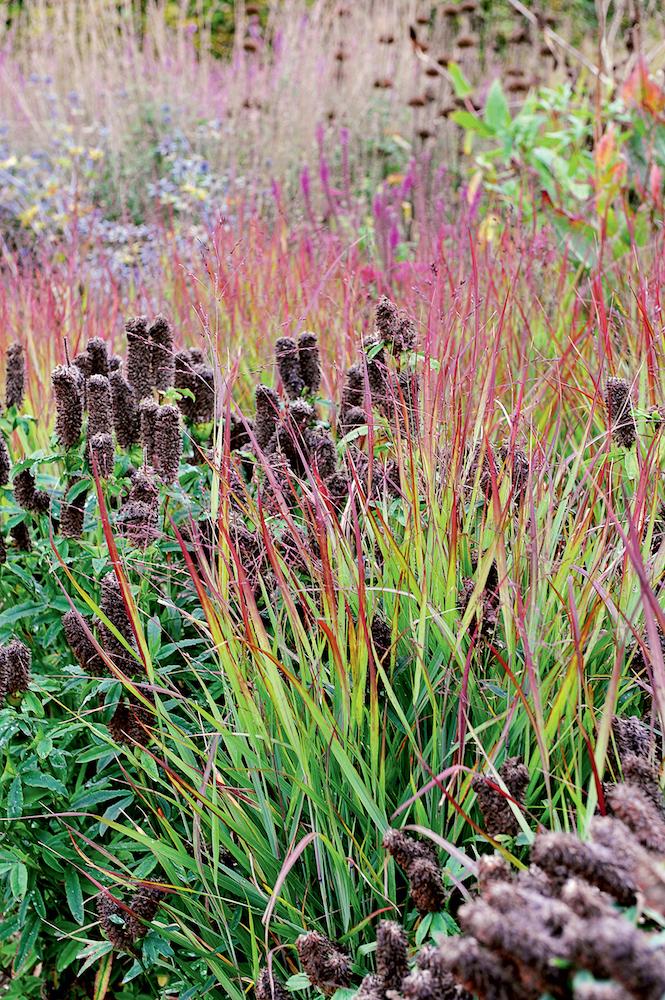 Декоративные злаковые растения: как их выбрать, чтобы они радовали в любой сезон?