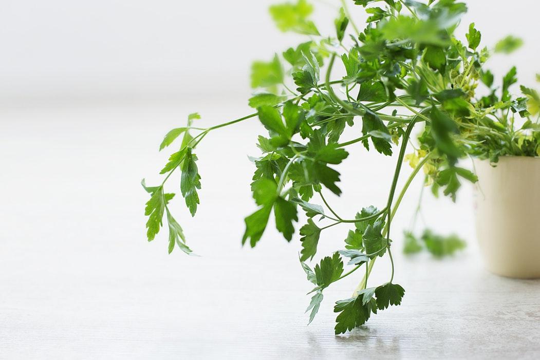 Переносим сад на подоконник: как вырастить зелень в собственной мини-теплице?